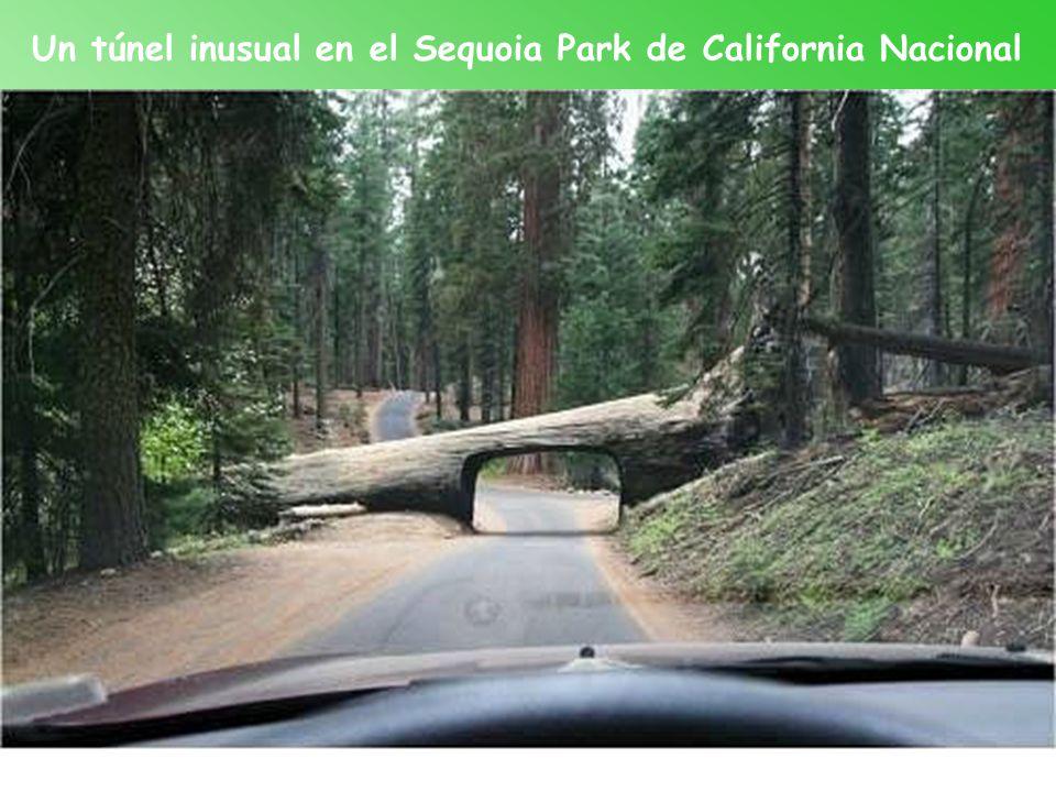 Un túnel inusual en el Sequoia Park de California Nacional
