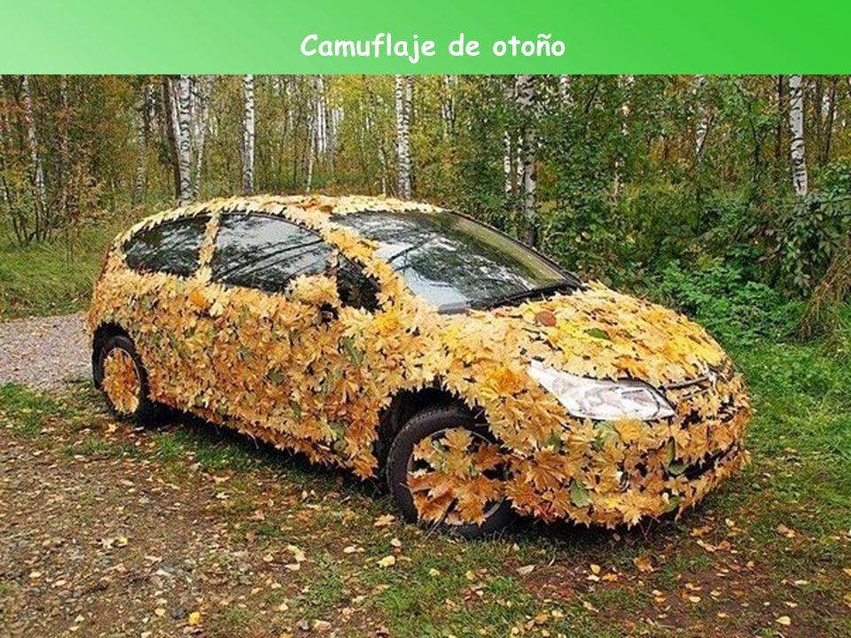 Camuflaje de otoño