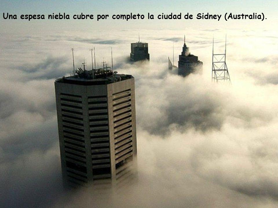 Una espesa niebla cubre por completo la ciudad de Sidney (Australia).