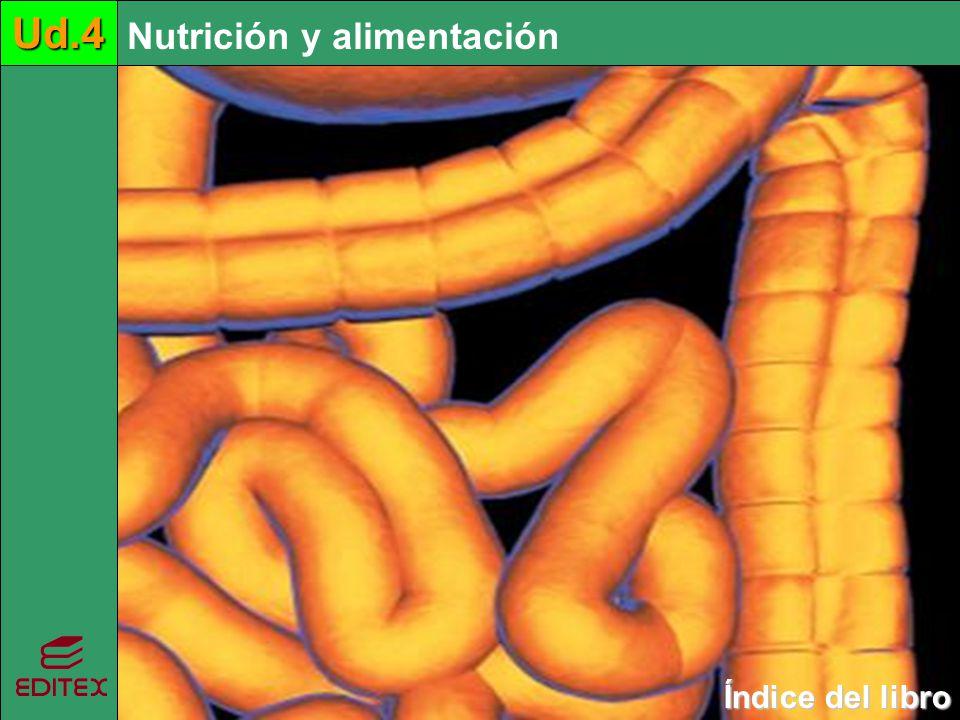 Ud.4 Ud.4 Nutrición y alimentación Índice del libro