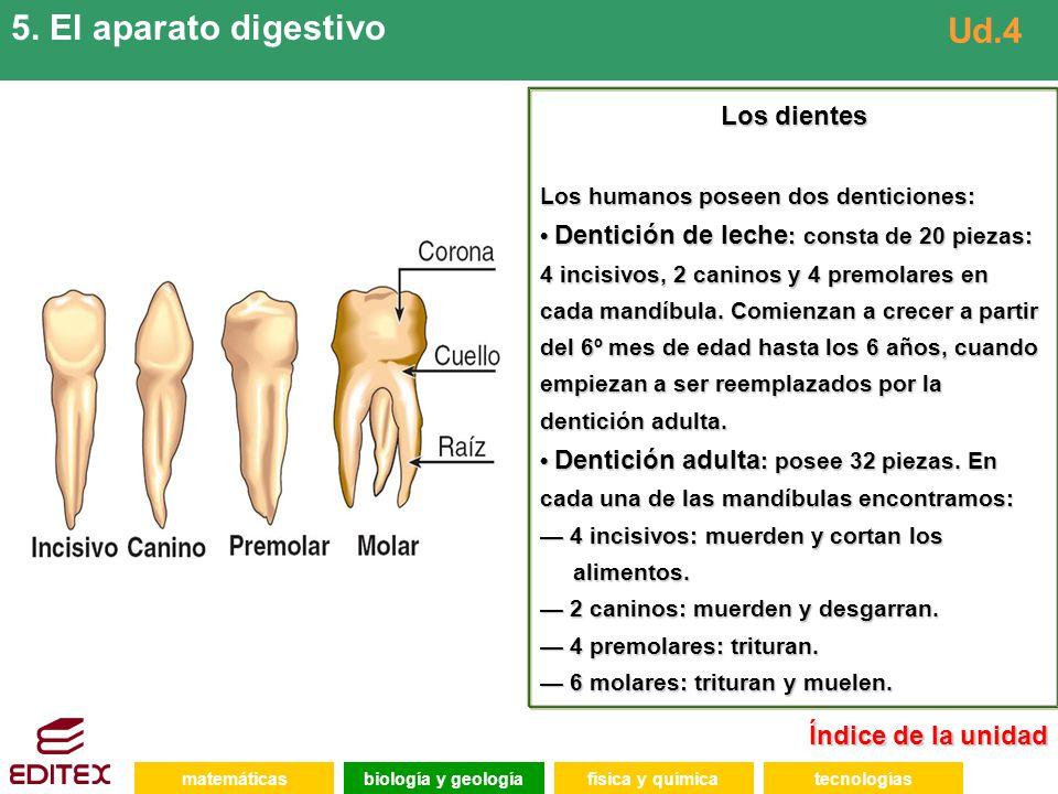5. El aparato digestivo Ud.4 Los dientes Índice de la unidad