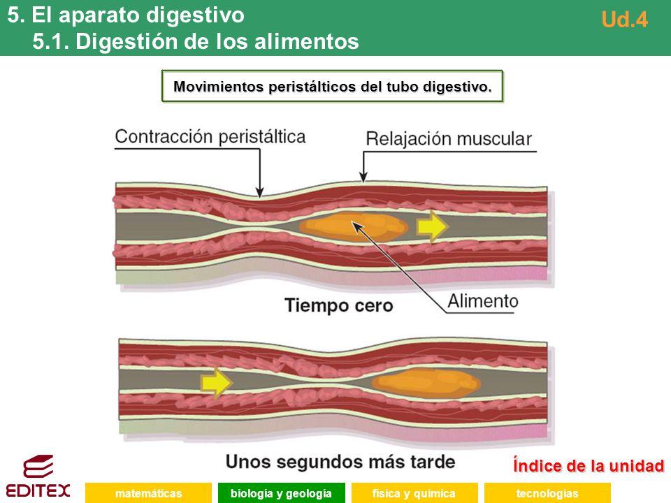 Movimientos peristálticos del tubo digestivo.