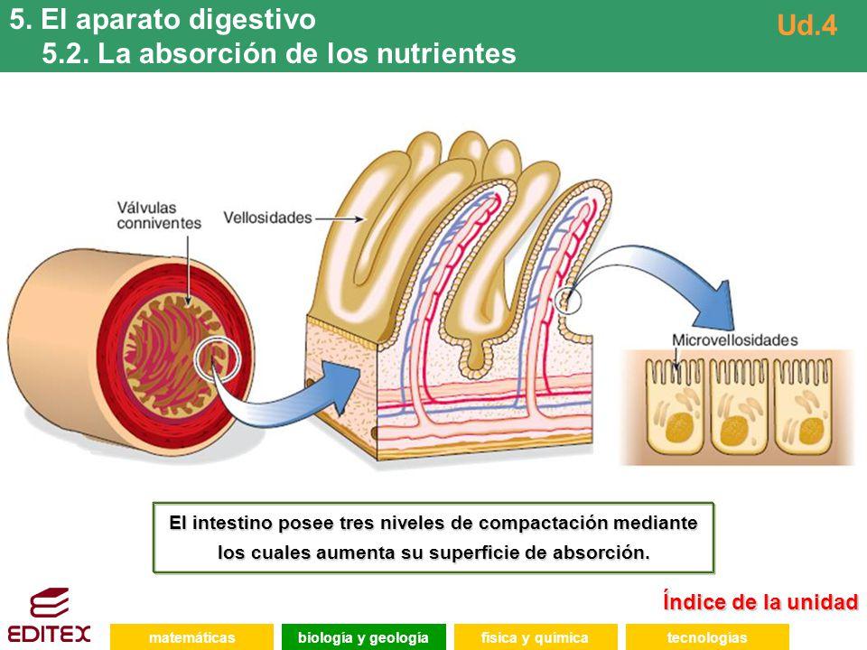 5.2. La absorción de los nutrientes Ud.4