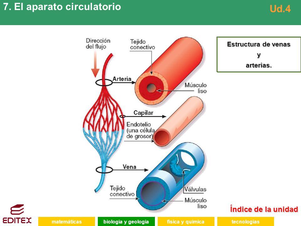 7. El aparato circulatorio Ud.4