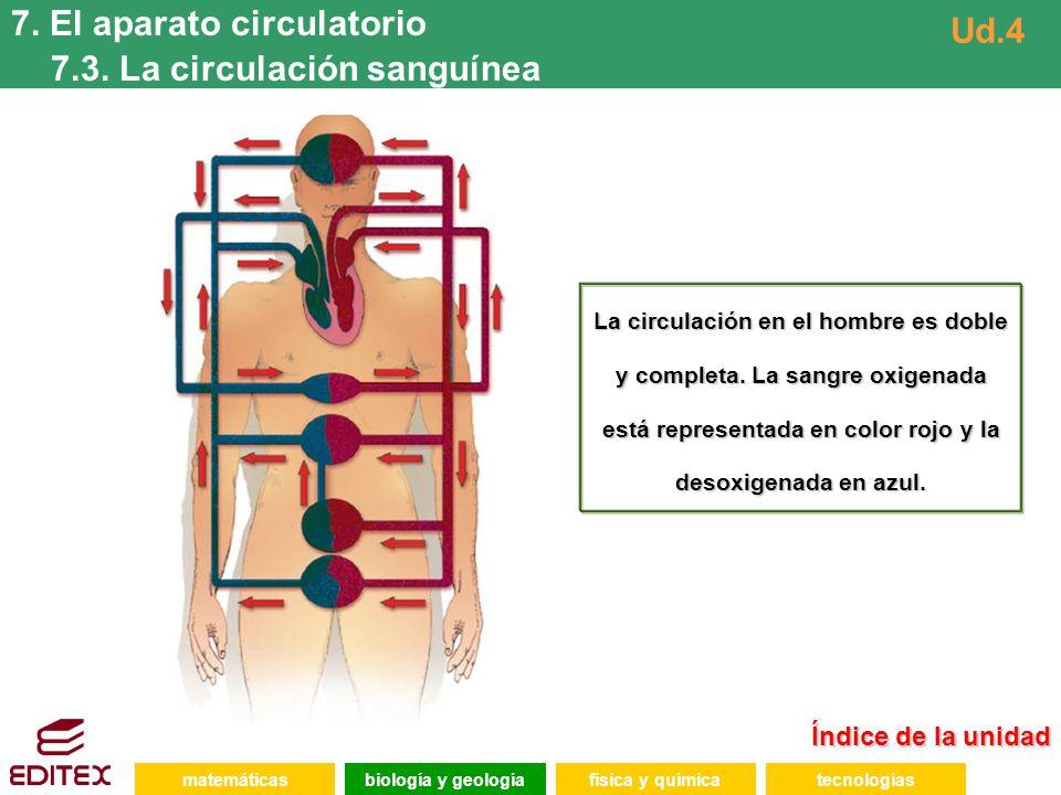 7. El aparato circulatorio 7.3. La circulación sanguínea Ud.4