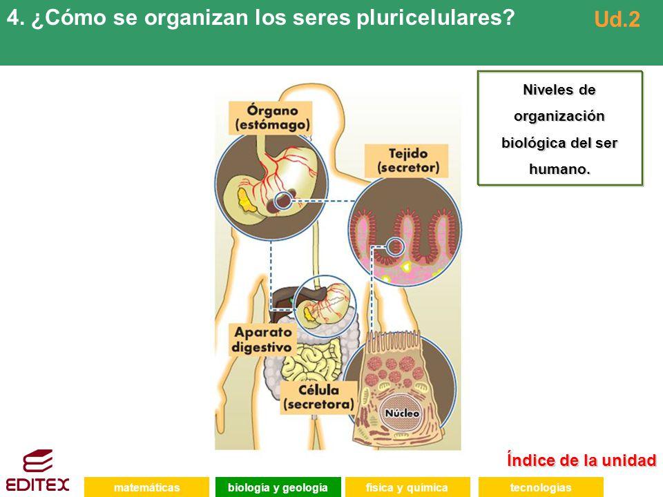 Niveles de organización biológica del ser humano.