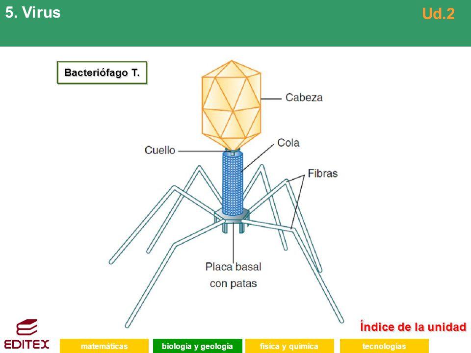 5. Virus Ud.2 Índice de la unidad Bacteriófago T. matemáticas