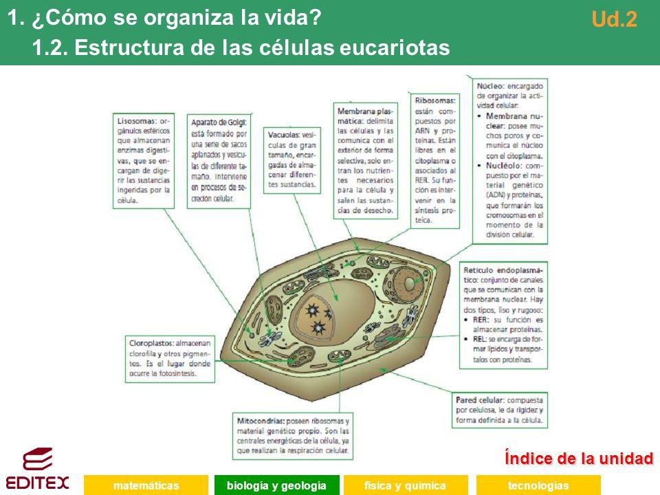 ¿Cómo se organiza la vida 1.2. Estructura de las células eucariotas