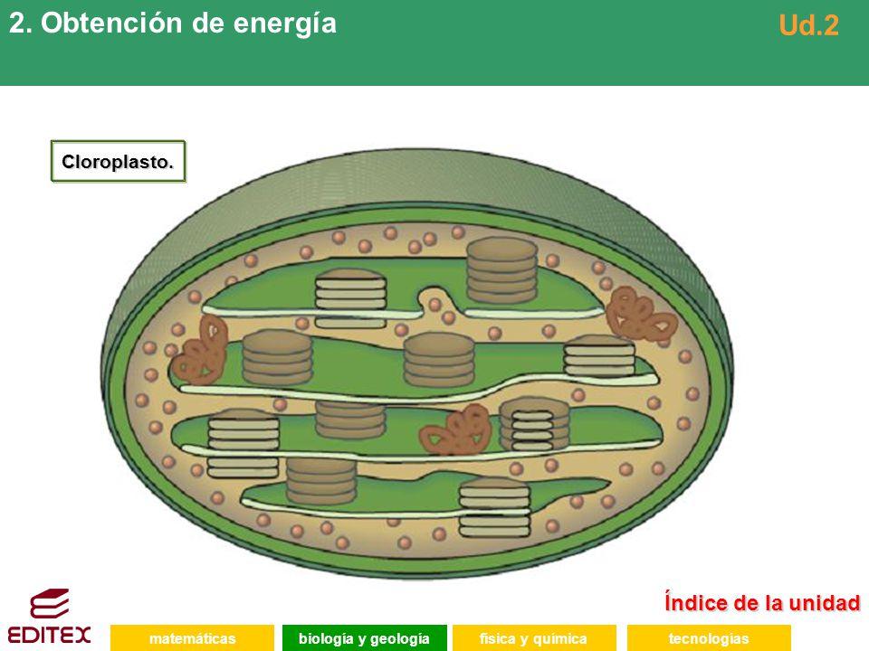 2. Obtención de energía Ud.2 Índice de la unidad Cloroplasto.