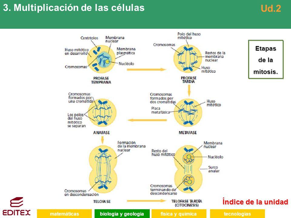 3. Multiplicación de las células Ud.2