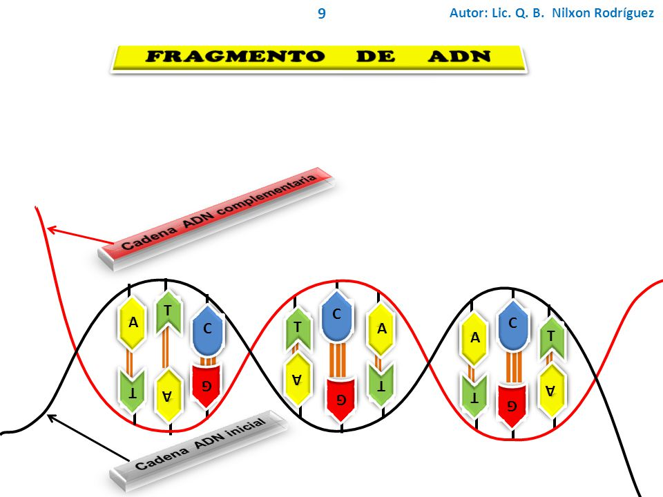 Cadena ADN complementaria