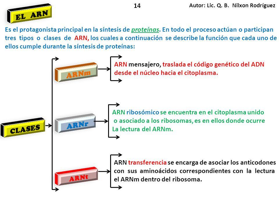 14 Autor: Lic. Q. B. Nilxon Rodríguez. EL ARN. Es el protagonista principal en la síntesis de proteínas. En todo el proceso actúan o participan.