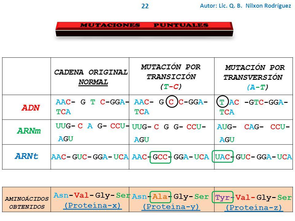 ADN ARNm ARNt MUTACIONES PUNTUALES MUTACIÓN POR TRANSICIÓN (T-C)
