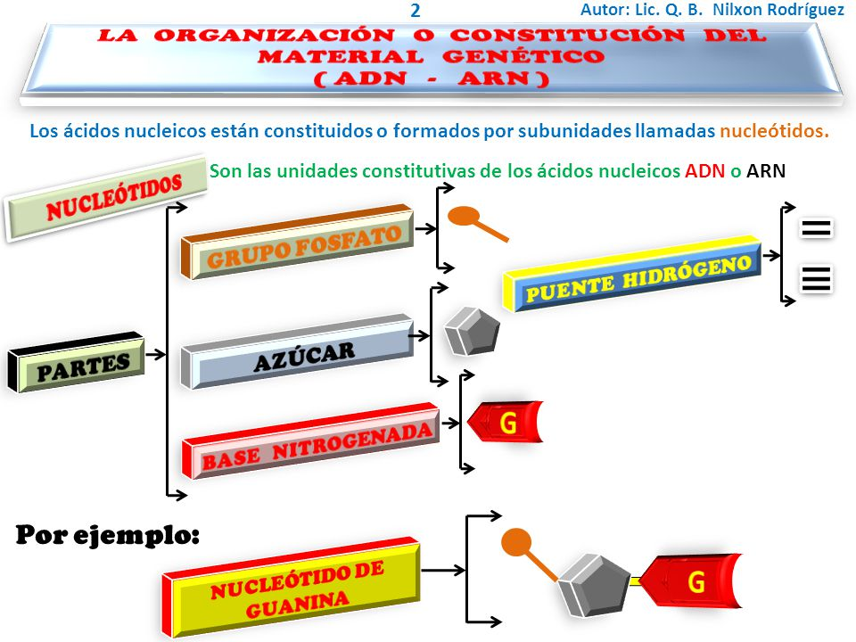 LA ORGANIZACIÓN O CONSTITUCIÓN DEL MATERIAL GENÉTICO