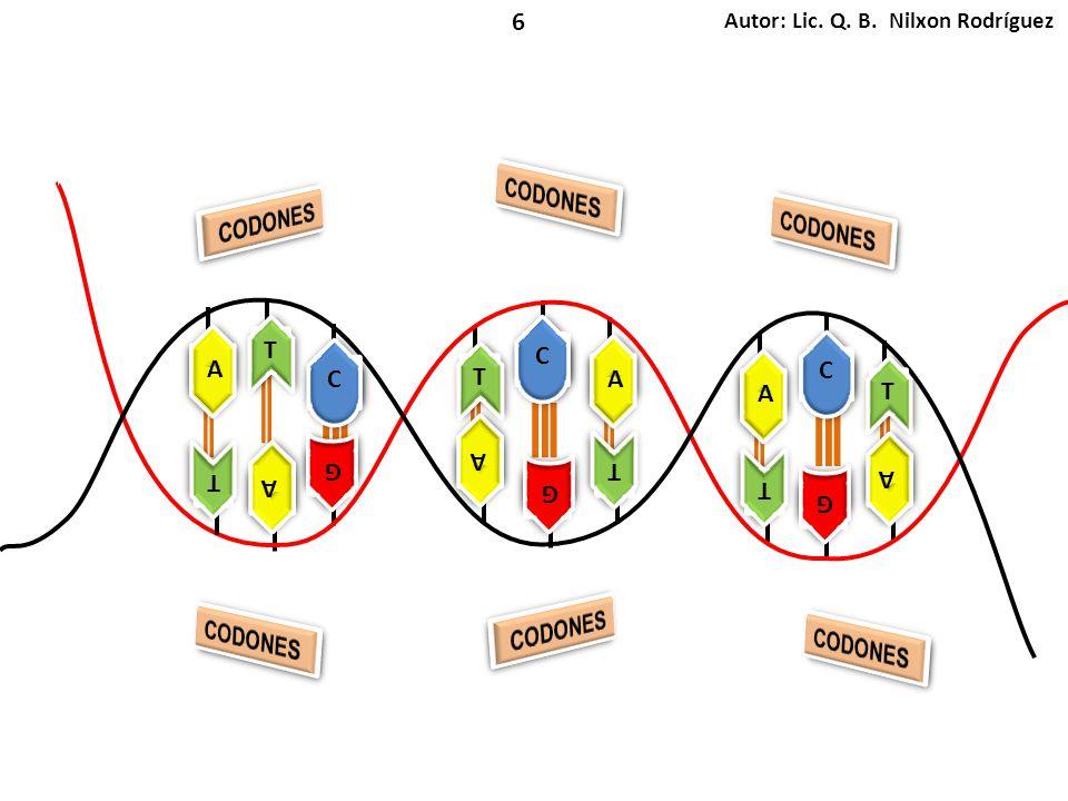 CODONES CODONES CODONES CODONES CODONES CODONES