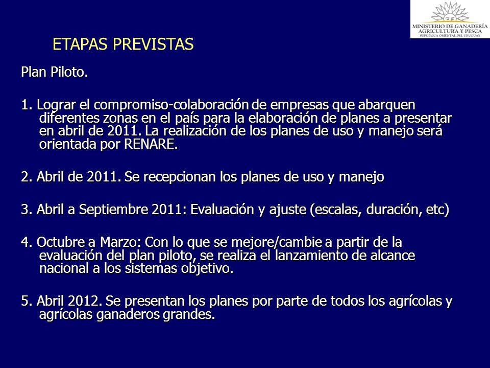 ETAPAS PREVISTAS Plan Piloto.