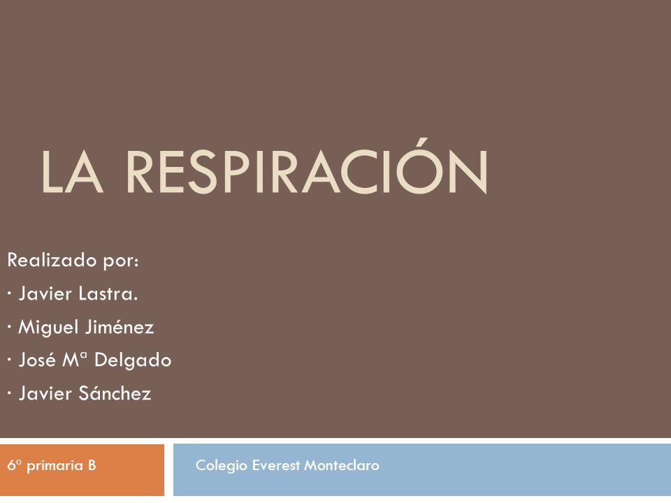 La respiración Realizado por: · Javier Lastra. · Miguel Jiménez