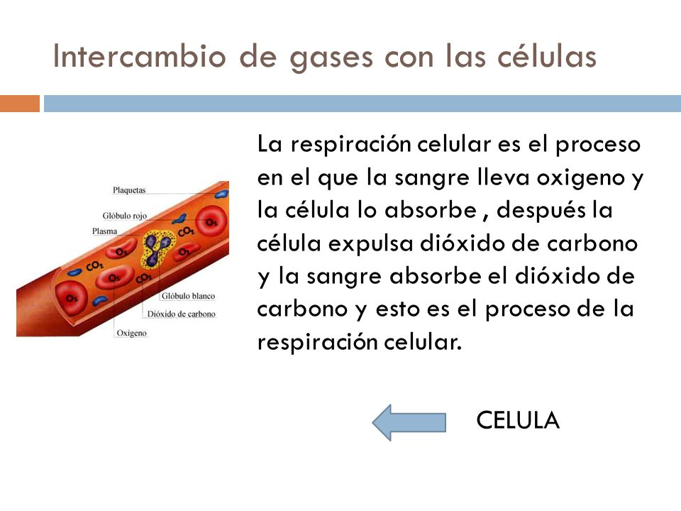 Intercambio de gases con las células