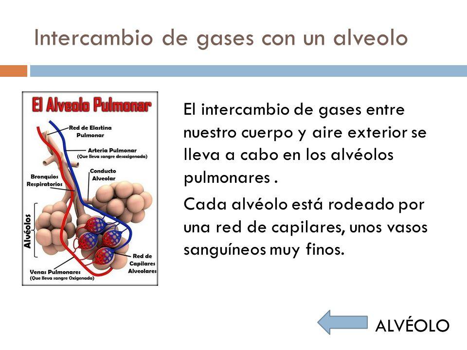 Intercambio de gases con un alveolo