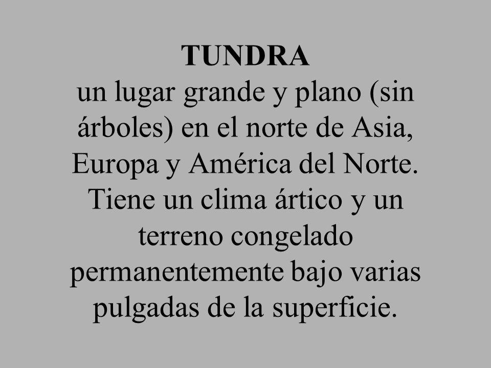 TUNDRA un lugar grande y plano (sin árboles) en el norte de Asia, Europa y América del Norte.