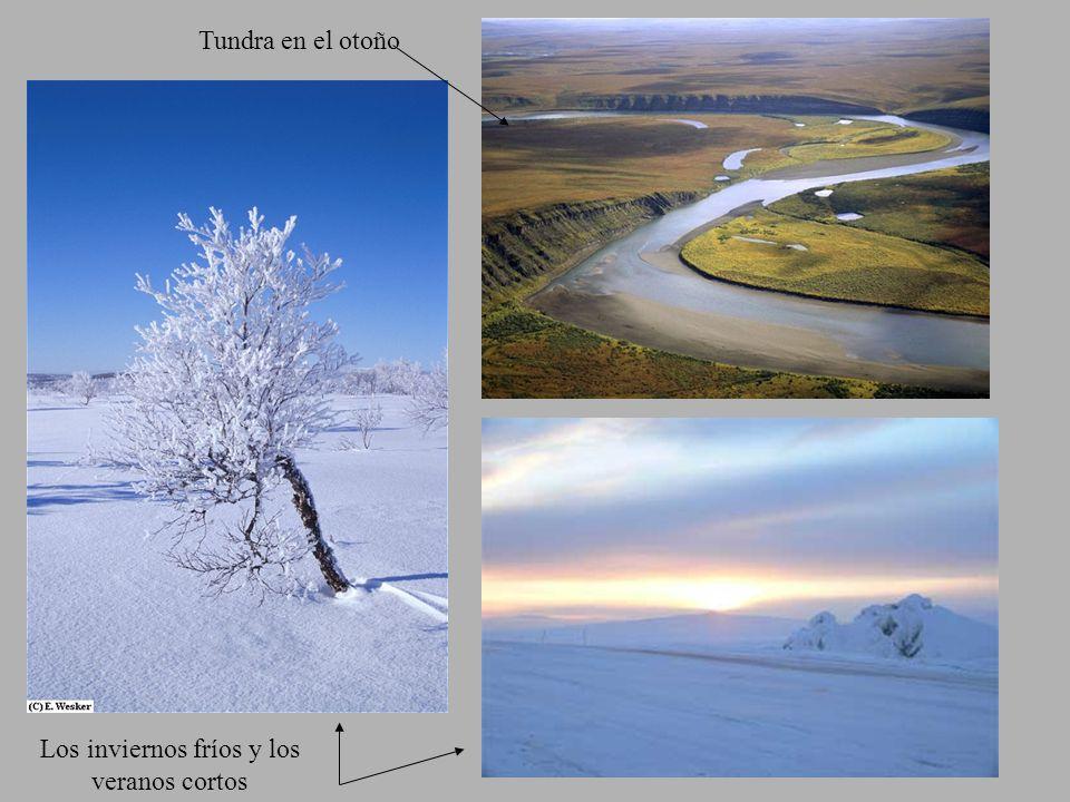 Los inviernos fríos y los veranos cortos