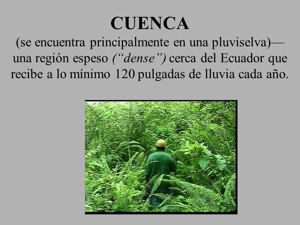 CUENCA (se encuentra principalmente en una pluviselva)—una región espeso ( dense ) cerca del Ecuador que recibe a lo mínimo 120 pulgadas de lluvia cada año.