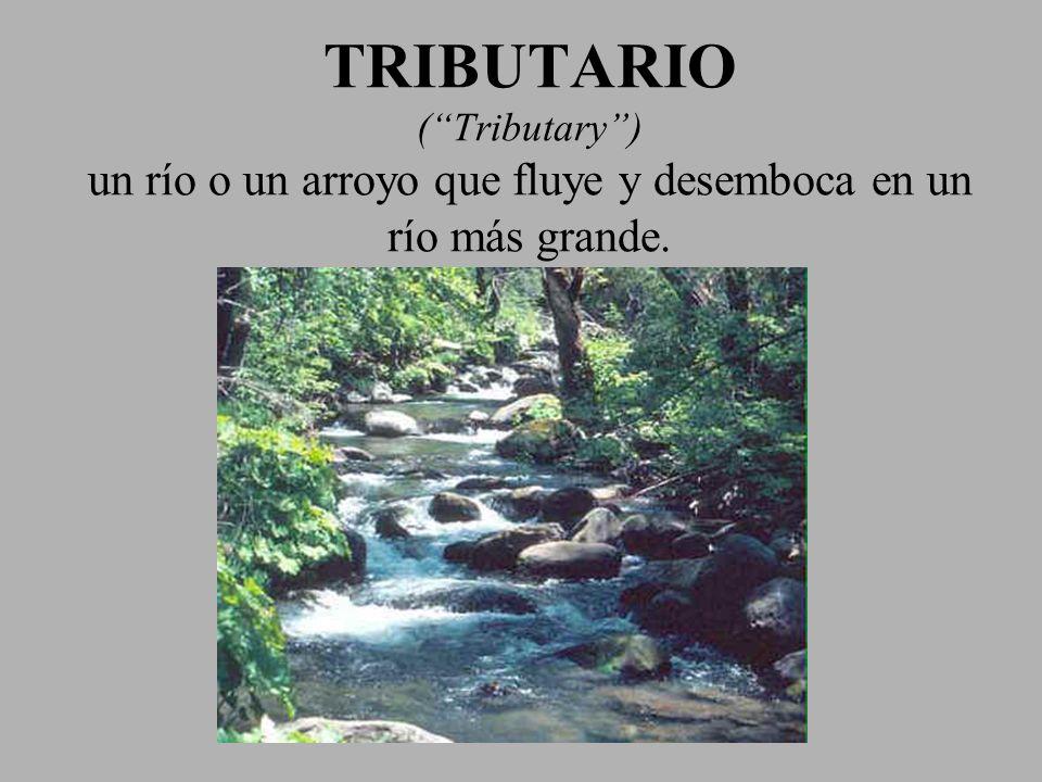 TRIBUTARIO ( Tributary ) un río o un arroyo que fluye y desemboca en un río más grande.