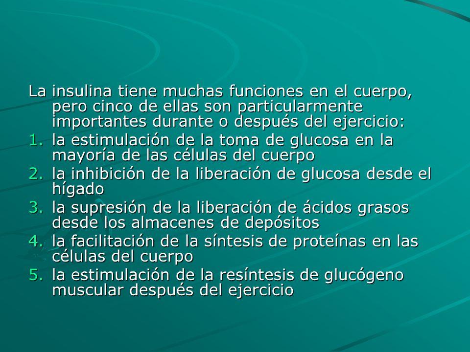 La insulina tiene muchas funciones en el cuerpo, pero cinco de ellas son particularmente importantes durante o después del ejercicio: