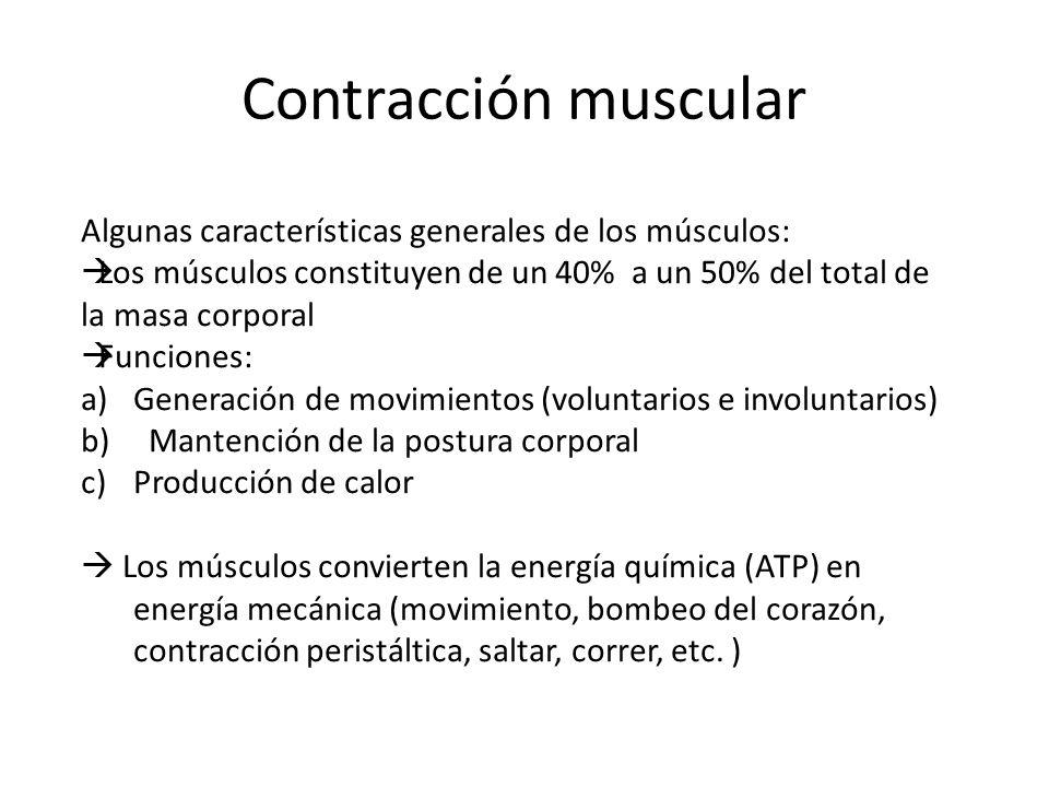 Contracción muscular Algunas características generales de los músculos: Los músculos constituyen de un 40% a un 50% del total de la masa corporal.