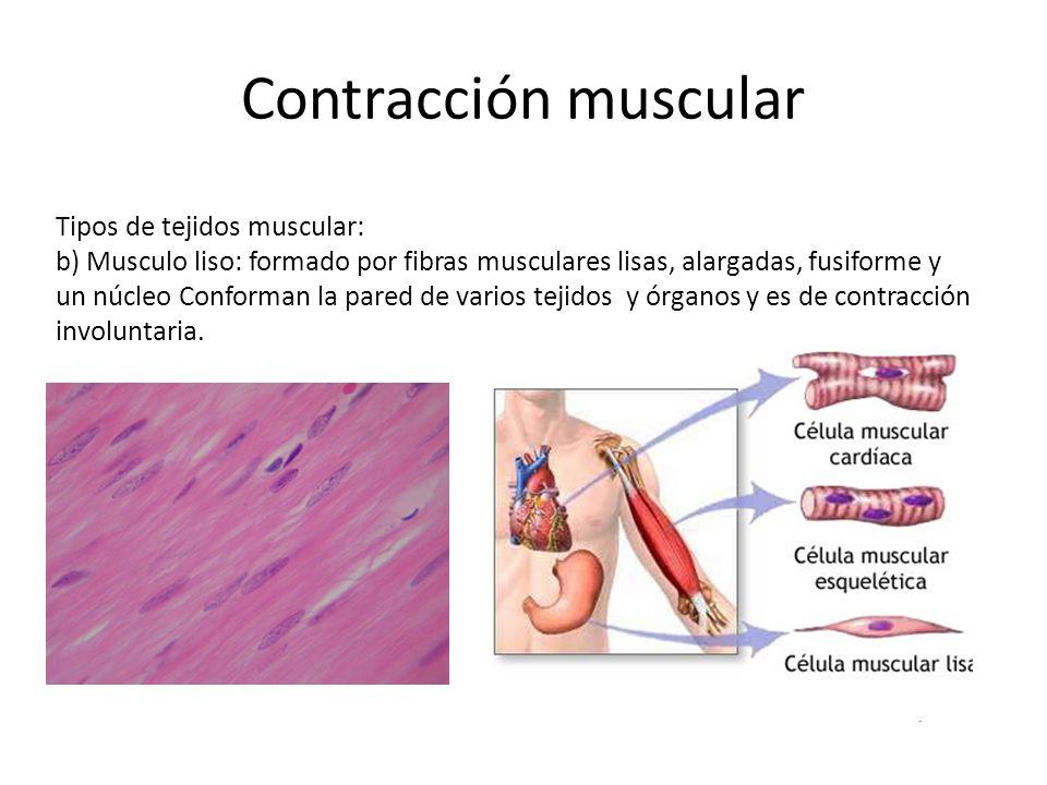 Contracción muscular Tipos de tejidos muscular: