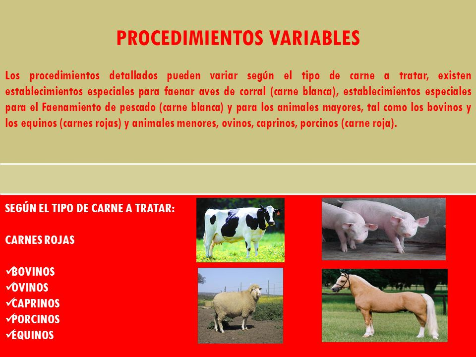 PROCEDIMIENTOS VARIABLES