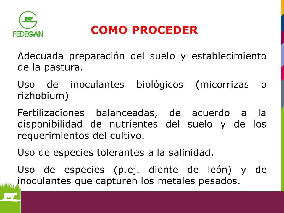 COMO PROCEDER Adecuada preparación del suelo y establecimiento de la pastura. Uso de inoculantes biológicos (micorrizas o rizhobium)