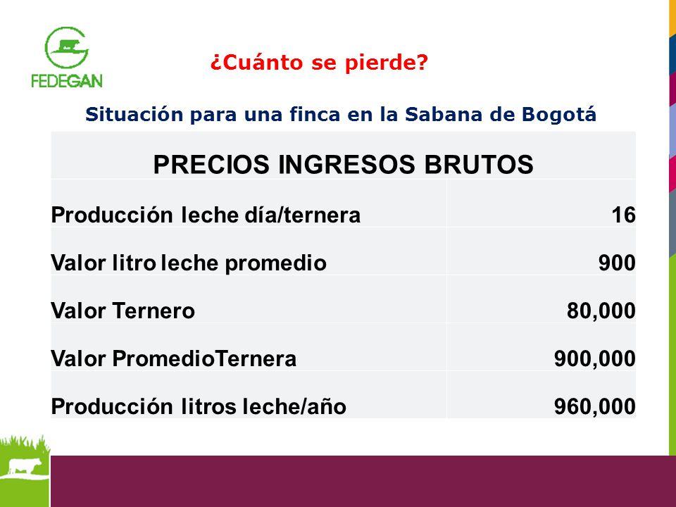 PRECIOS INGRESOS BRUTOS