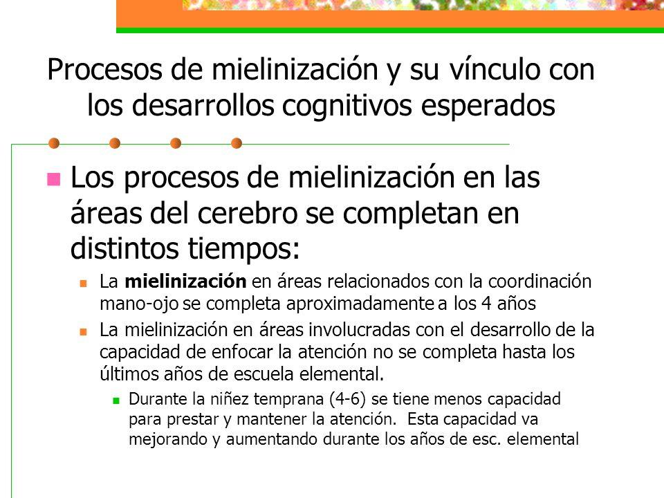Procesos de mielinización y su vínculo con los desarrollos cognitivos esperados