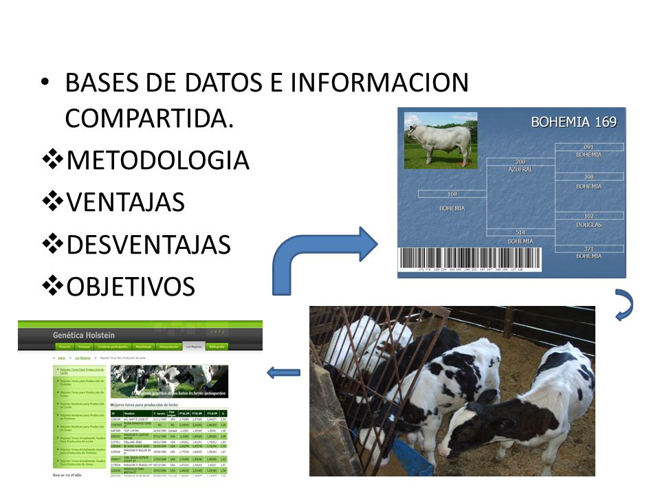 BASES DE DATOS E INFORMACION COMPARTIDA.