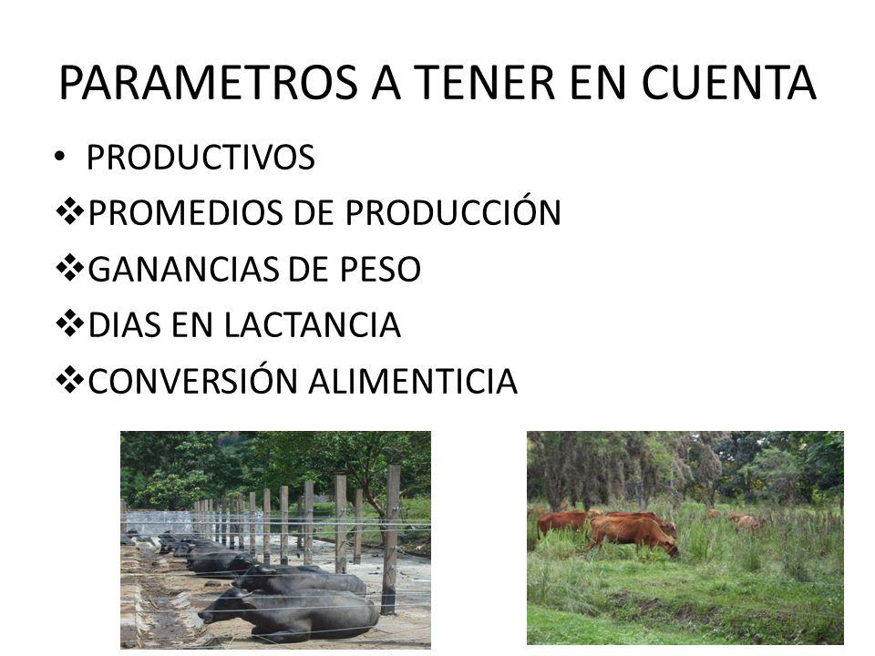 PARAMETROS A TENER EN CUENTA