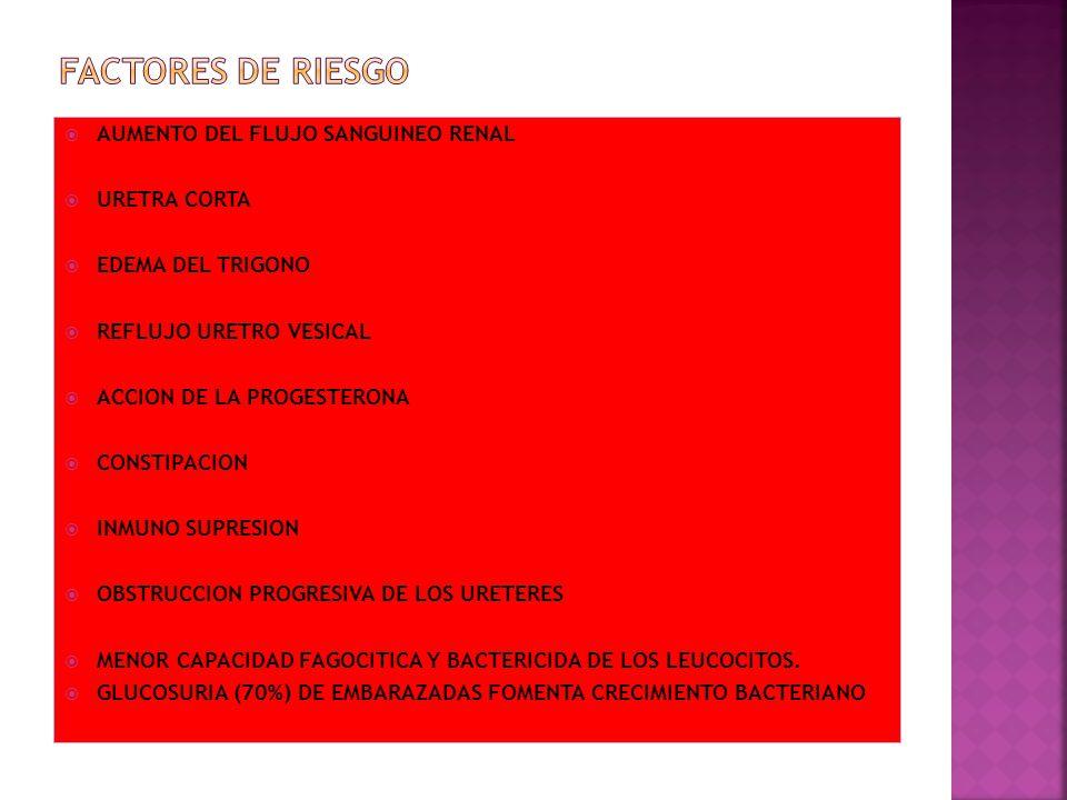 FACTORES DE RIESGO AUMENTO DEL FLUJO SANGUINEO RENAL URETRA CORTA