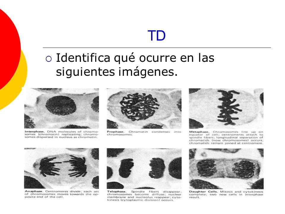 TD Identifica qué ocurre en las siguientes imágenes.