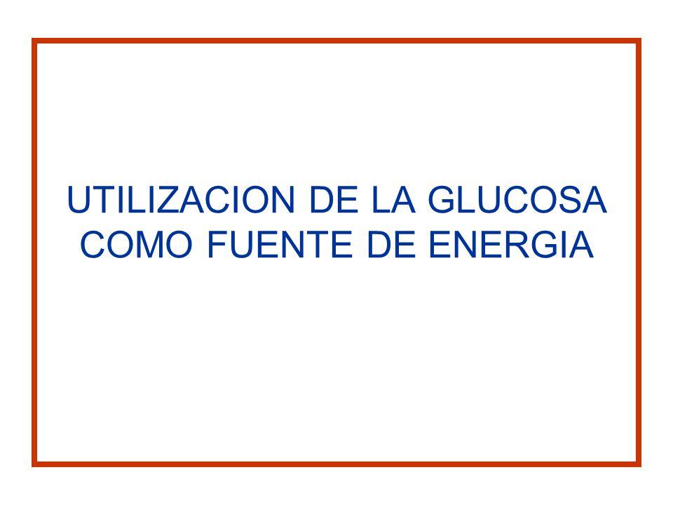 UTILIZACION DE LA GLUCOSA COMO FUENTE DE ENERGIA