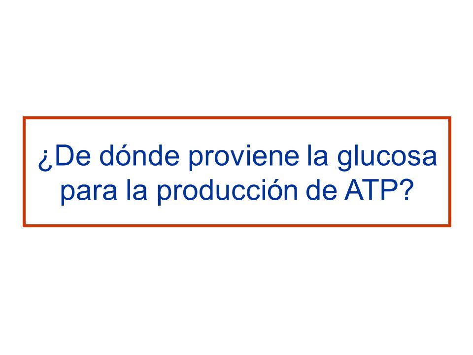 ¿De dónde proviene la glucosa para la producción de ATP