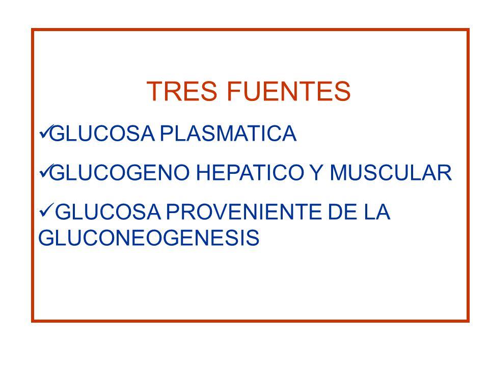 TRES FUENTES GLUCOSA PLASMATICA. GLUCOGENO HEPATICO Y MUSCULAR.