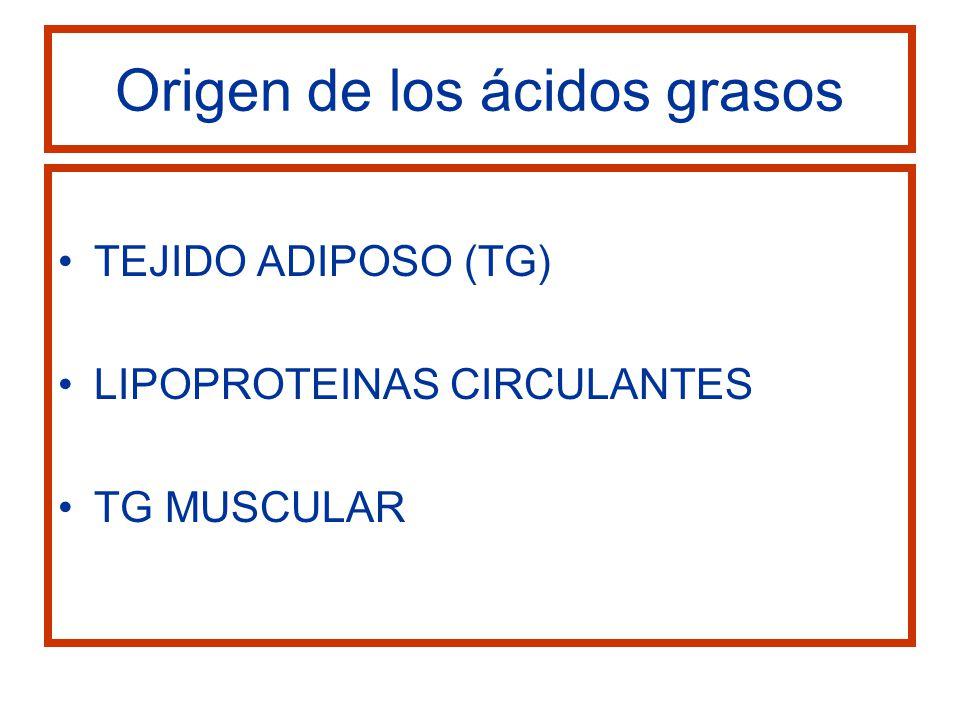 Origen de los ácidos grasos