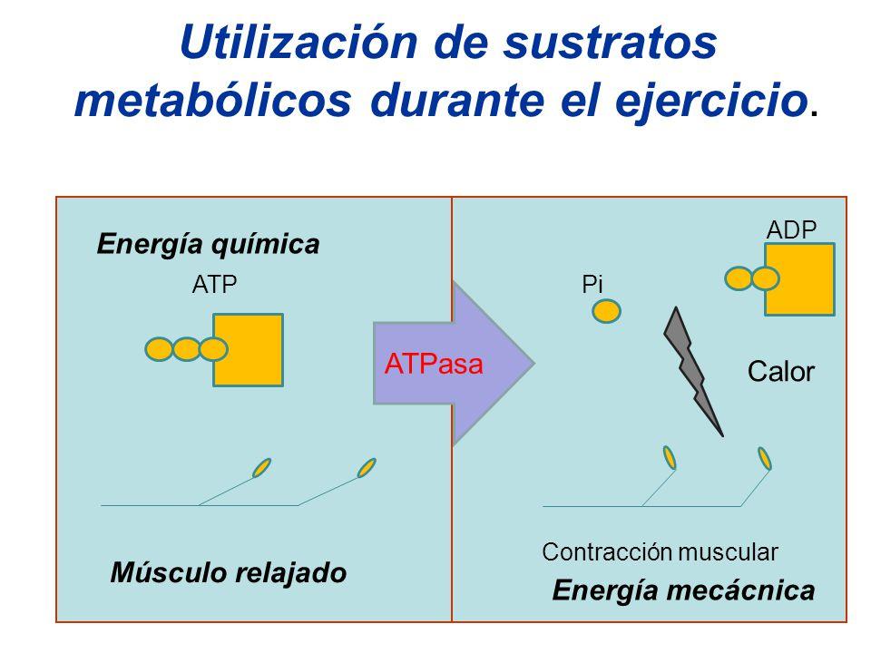 Utilización de sustratos metabólicos durante el ejercicio.
