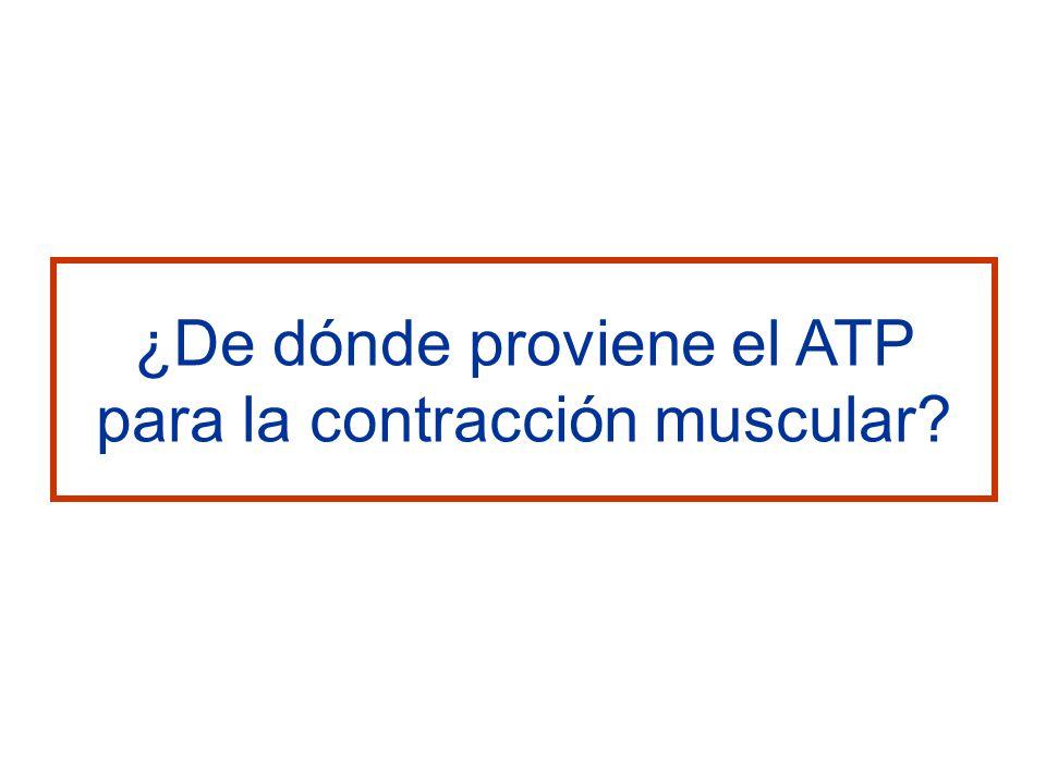 ¿De dónde proviene el ATP para la contracción muscular
