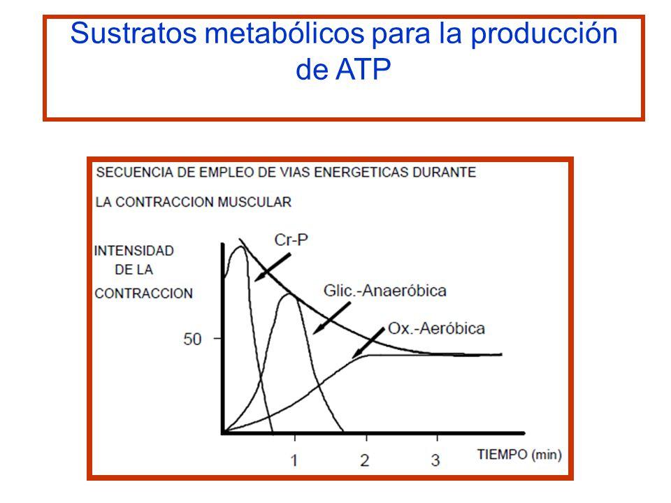 Sustratos metabólicos para la producción de ATP