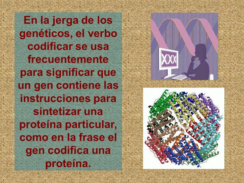 En la jerga de los genéticos, el verbo codificar se usa frecuentemente para significar que un gen contiene las instrucciones para sintetizar una proteína particular, como en la frase el gen codifica una proteína.