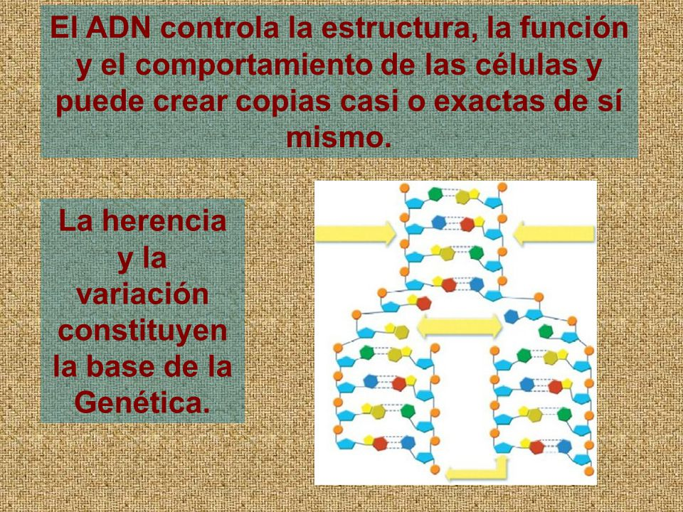 La herencia y la variación constituyen la base de la Genética.