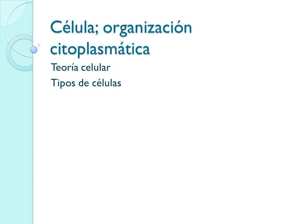 Célula; organización citoplasmática