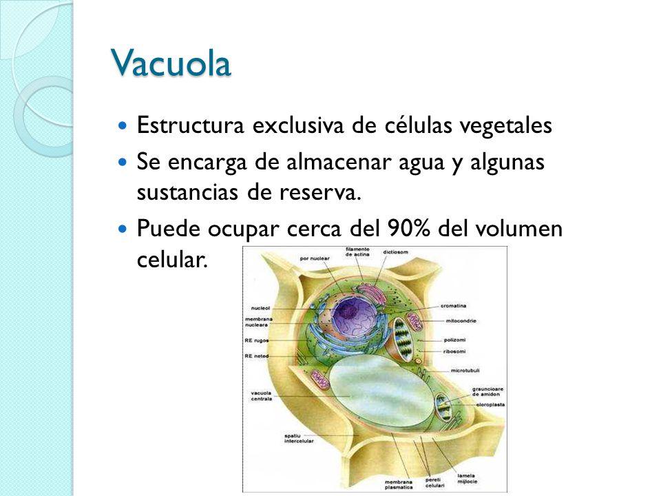 Vacuola Estructura exclusiva de células vegetales