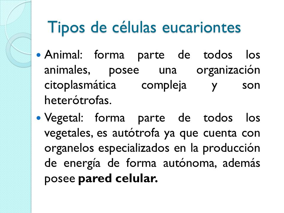 Tipos de células eucariontes